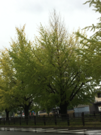 秋の入り口 府立植物園 - 京都西陣 小さな暮らしから、田舎暮らしへぼちぼち・・・