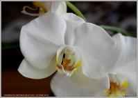 シリーズ家で咲く花(2019)-24花いろいろ - 野鳥の素顔 <野鳥と日々の出来事>