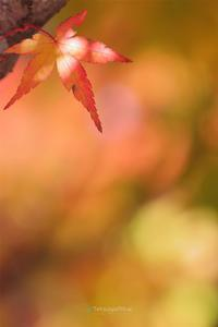 【奥日光の秋2019】Vol.1 - TOCHIGI FOUR SEASONS