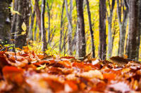 紅葉 - 松之山の四季2