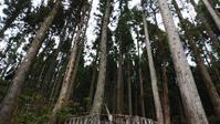 県産杉の森ロケーションツアーへ - 高橋良彰建築研究所のブログ