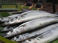 秋刀魚の会ときどき芋掘り注意報 - ときの杜『散策日記』(穂の香/ほのか・あや音/あやね・燈いろ/といろ)