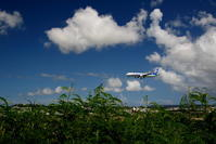 伸び放題 - 南の島の飛行機日記