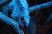 「ecoハウチュー」OPEN!!③~日本初公開!ウスイロホソオクモネズミ!! - 続々・動物園ありマス。
