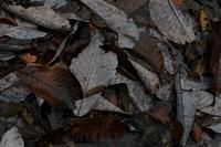 朴葉のたまり場 - フォトな日々