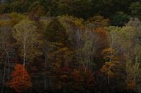 秋模様 - フォトな日々