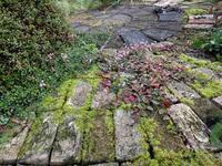 苔むしむし - natural garden~ shueの庭いじりと日々の覚書き