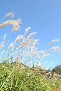 芸術の秋 - 千葉県いすみ環境と文化のさとセンター