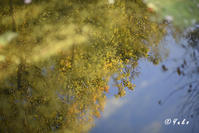 秋晴れ / An Autumn day - Seeking Light - 光を探して。。。
