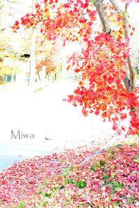 勇気のいる第一歩がもたらすもの - Miwaの優しく楽しく☆