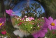 花を撮る レンズで遊ぶ! - ベルリンに思いを馳せて