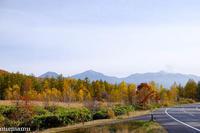 青い池へ向かう道路のビューポイントで~10月の美瑛 - My favorite ~Diary 3~