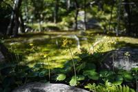 「つわぶきの庭-大山崎山荘美術館庭園-」 - ほぼ京都人の密やかな眺め Excite Blog版