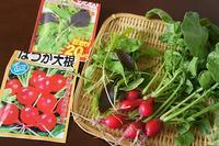 ベランダ栽培のミニ野菜 - SABIOの隠れ家