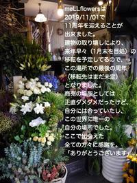 meLLflowersは2019/11/01で11周年を迎えることが出来ました。 - 札幌 花屋 meLL flowers