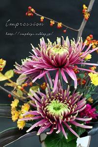 定期装花からマムバルタザール - Impression Days