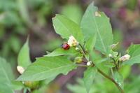 [秋の鉢伏山ウォーク] - 不定期更新 彩都付近の自然観察日記