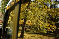 秋に輝く - ちわりくんのありふれた毎日III