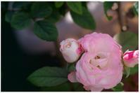 タイムスリップ - 花ありて 日々