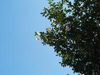 インディアンサマー - hibariの巣