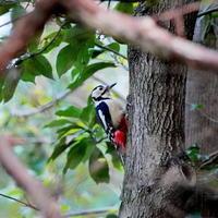 水元公園のアカゲラMMK - 野鳥観察記録
