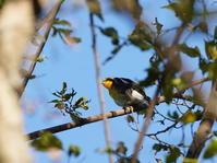 11月4日です。未だキビタキが!MMK - 野鳥観察記録