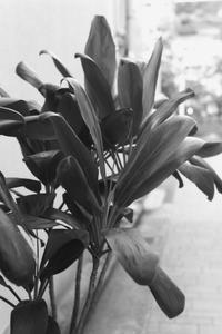 植物 - 散歩と写真