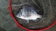 日曜日は天草苓北町へアジ釣りに行く - ステンドグラスルーチェの日常
