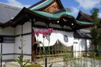 「嵯峨菊展-大覚寺-」 - ほぼ京都人の密やかな眺め Excite Blog版