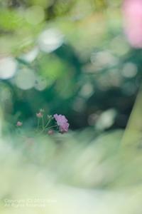 連休最終日に@花菜ガーデン - カメラをもってふらふらと