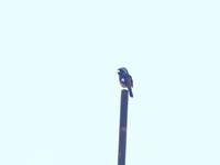 縁側から - TACOSの野鳥日記