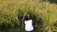 ほっこり米クラブ稲刈り・池干しイベント終了! - ぼくたちに出来る事