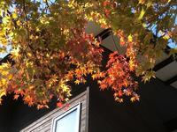 紅葉真っ盛り - 風路のこぶちさわ日記
