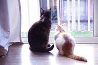 窓辺の二人 - ぶつぶつ独り言2(うちの猫ら2018)