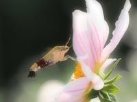 花から花へ 1大阪市 - ty4834 四季の写真Ⅱ
