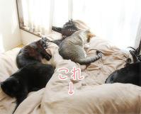 猫の看護師さん - ちいさなチカラ