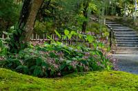 秋の始まり(高台寺) - 花景色-K.W.C. PhotoBlog