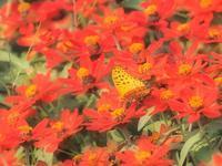 花から花へ 2大阪市 - ty4834 四季の写真Ⅱ