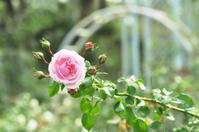 Autumn Rose - *la nature*