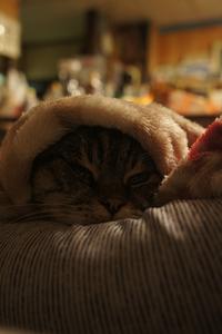 今日のはぁちゃん【お気に入りの毛布】 - 森小日記(もりしょうにっき)