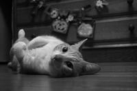 スーパーモデルその2 - ぎんネコ☆はうす