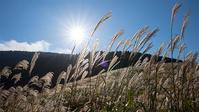 今箱根仙石原のすすきは見頃です - エーデルワイスPhoto