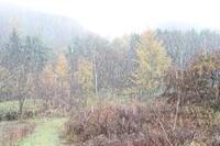 初雪 - 四季のうつろい