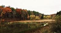 晩秋の森と住処 - NYからこんにちは