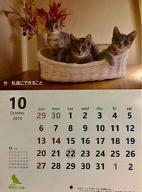 10月は - 猫多摩散歩日記 2