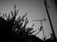 TVアンテナ - 節操のない写真館