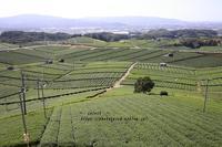 八女の茶畑 - Select