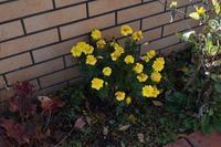 自然栽培ついに零下の気温小松菜トンネル - 自然栽培 釧路日記