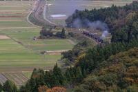 秋の山に向かって築堤を走る汽車- 2019年晩秋・羽越本線 - - ねこの撮った汽車