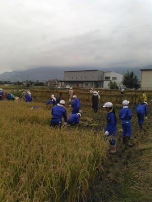 小学校収穫祭 -
